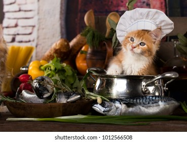 maine coon kitten and fish
