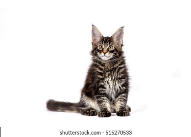Long Haired Cat Images, Stock Photos & Vectors | Shutterstock