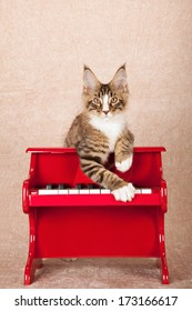 Maine Coon kitten leaning over red toy piano against beige background