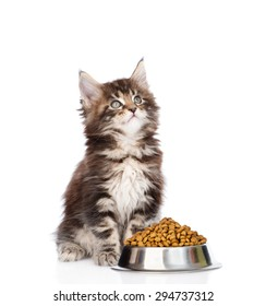 maine coon kitten sitting with a bowl of dry cat food and looking up. isolated on white background