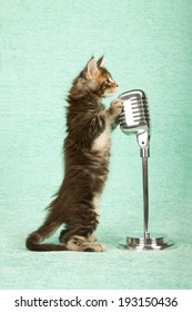 Maine Coon kitten standing on hind legs with paws on faux vintage microphone on stand on light mint green background