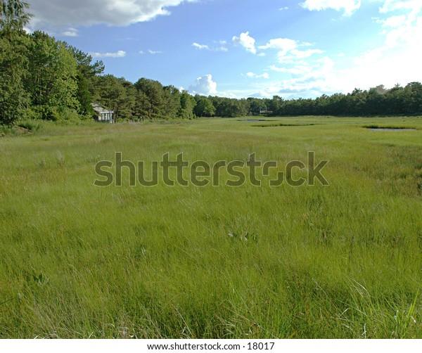 Maine Field