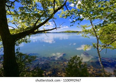 Maine Through the Trees