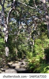 Maintained beautiful bush walking track, Sydney Australia