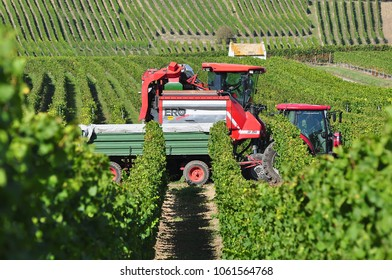 MAINZ,GERMANY-OCTOBER 05,2016: Holander takes away the grape harvest.