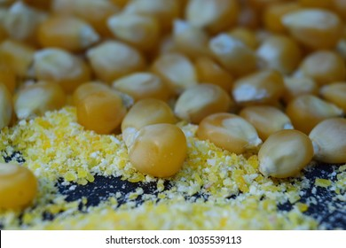 Maize beans, corn kernels and cornmeal flour spread on wooden table. Close-up shoot, blurred background.