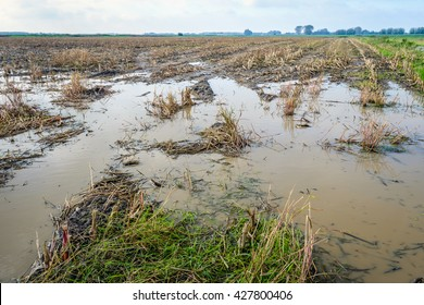 Maize stubble field flooded with large pools of water after abundant rain