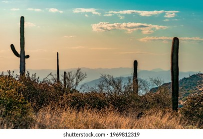 Majestic Arizona sunset with Saguaro silhouette shot from the McDowell Mountains.