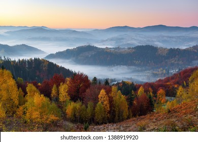 Majestic autumn rural scenery. Landscape with beautiful mountains, fields and forests covered with morning fog. There are trees on the lawn full of orange leaves. Picturesque resort Carpathian, Europa