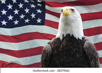 Majestic Bald eagle in front of USA flag
