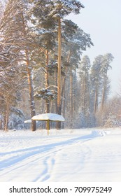 majestic beautiful winter forest. pine trees covered with snow