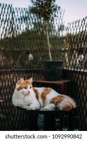Majestic cat lying on table on a balcony