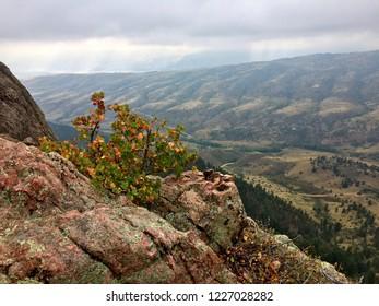 Majestic Colorado mountain bush overlooking serene valley below