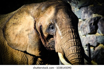 Majestic Elephant close up