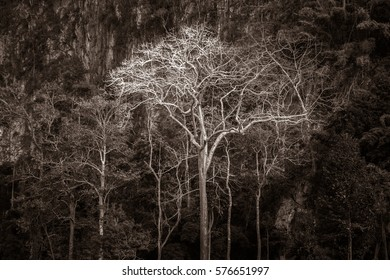 Majestic giant jungle tree, amazing forest background, black and white art illustration