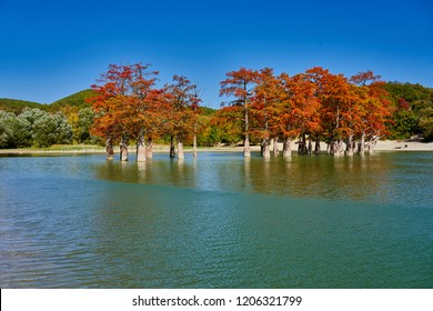 Majestic golden Taxodium distichum stand in a gorgeous lake against the backdrop of the Caucasus mountains in the fall. Autumn. October. Sukko Valley. Anapa. Krasnodar region. Russia.