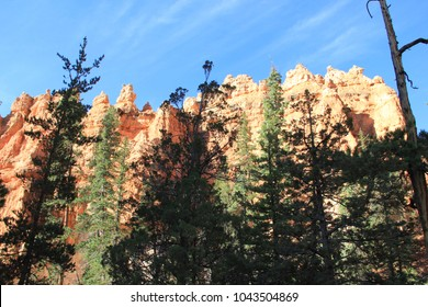 Majestic hoodoos and scattered pine tree forests within Navajo Loop Trail in Bryce Canyon National Park, Utah. Bright deep blue Summer 2015 day.