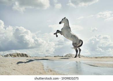 majestic horse, Fabulous scene of the jumping horses