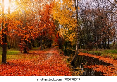 Majestic landscape with autumn trees in forest gloving in the sunlight. artistic creative image. wonderful amazing scenery.