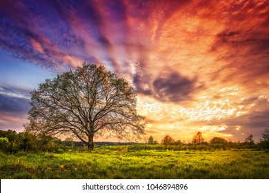 Majestic landscape of bright colorful sunrise over rural meadow with large tree in the spring morning. Beautiful colored cloudy sky on horizon and shining grass from sunlights. Scenery nature.