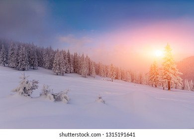 Majestic landscape winter sunrise in the mountains. Fantastic morning glowing by sunlight.  View of  snow covered forest trees.