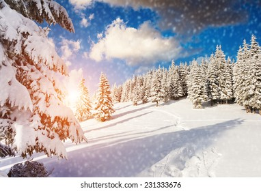 Majestic mountain landscape glowing by sunlight and blue sky. Dramatic wintry scene. Carpathian, Ukraine, Europe. Beauty world. Happy New Year!