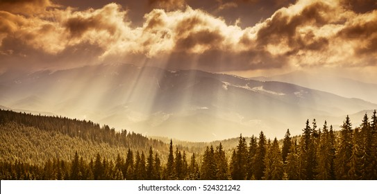 Majestic pine tree forest at autumn mountain valley. Dramatic picturesque morning scene. Warm toning effect. Carpathians, Ukraine, Europe. Beauty mountain landscape on the cloudy sky with sun beams