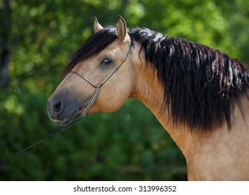 Majestic portrait of strong royal chestnut horse