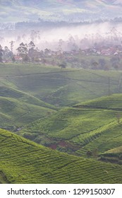 Majestic scenery of tea plantaions in the foggy morning, West Java, Indonesia