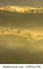 Majestic scenery of tea plantation in the misty morning, West Java, Indonesia