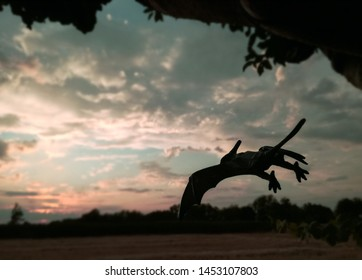 Majestic silhouette of a Pteranodon at nightfall. Carnivore with excellent flight and vision. Known as Flying Dinosaur is technically a prehistoric flying reptile from the Cretaceous period. Jurassic.