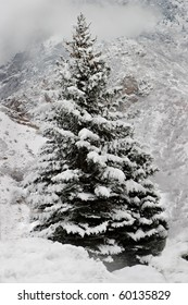 A majestic snow-covered pine tree with a background of mountains, clouds and snow.