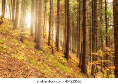 Majestic sunny pine forest, nature travel outdoors background - Shutterstock ID 454223563