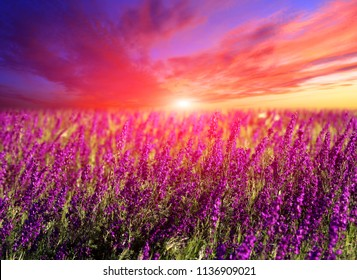 Majestic sunset over summer flowers on meadow