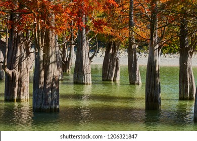 Majestic Taxodium distichum in a gorgeous lake against the backdrop of the Caucasus mountains in the fall. Autumn. October. Sukko Valley. Anapa. Krasnodar region. Russia.