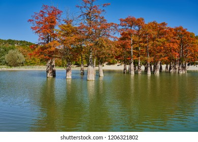 Majestic Taxodium distichum stand in a gorgeous lake against the backdrop of the Caucasian mountains in the fall and look like gold. Autumn. October. Sukko Valley. Anapa. Krasnodar region. Russia.