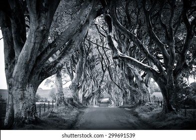 majestic tree alley with old trees