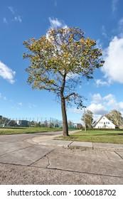 Majestic Tree on a Street Corner, under a Blue Cloudy Autumn Sky
