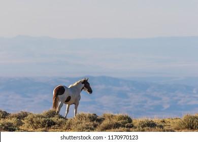 Majestic Wild Horse in Colorado