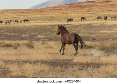 Majestic Wild Horse (mustang)