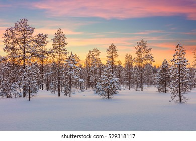 Majestic winter landscape - colorful sundown, forest and big snow