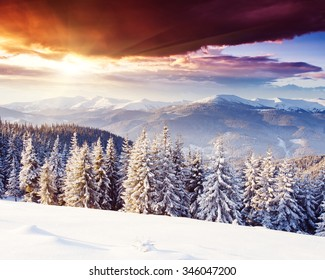 Majestic winter landscape glowing by sunlight in the morning. Dramatic wintry scene. Location Carpathian, Ukraine, Europe. Beauty world. Happy New Year!
