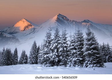 Majestic winter landscape at sunrise with snowy fir trees and high mountain peaks.