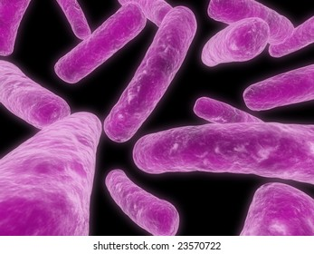 major bacteria