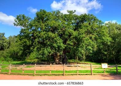 Major Oak, Sherwood Forest, Nottinghamshire