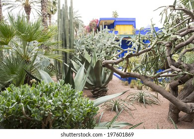 MAJORELLE GARDEN, MARRAKECH, MOROCCO, MAY 11, 2014. Cactuses, palm trees and small peaces of the former blue house of the fashion guru Yves Saint-Laurent, in Marrakech, Morocco, on May 11th, 2014.