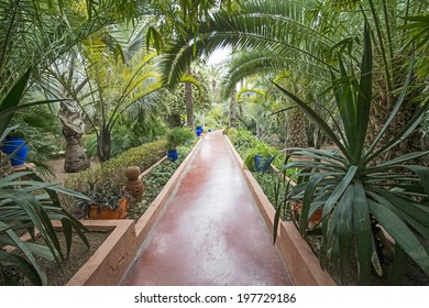 MAJORELLE GARDEN, MARRAKECH, MOROCCO, MAY 11, 2014. Corridors with cactuses and palm trees in the garden of the fashion guru Yves Saint-Laurent, in Marrakech, Morocco, on May 11th, 2014.