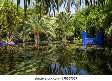 The Majorelle Garden Pond shot in Marrakesh, Morocco