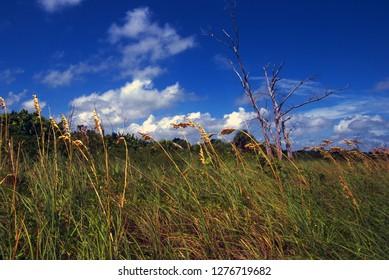 Majory Stoneman Douglas Nature Center, Key Biscayne, Florida, USA, reef tour, September 20, 2002