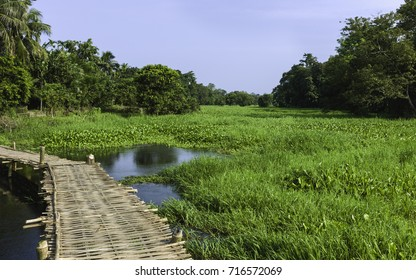 Majuli, Assam, India. Bamboo causeway over lagoon covered in grasses and water hyacinth following heavy monsoon rains on a bright day on Majuli island, Assam, India.
